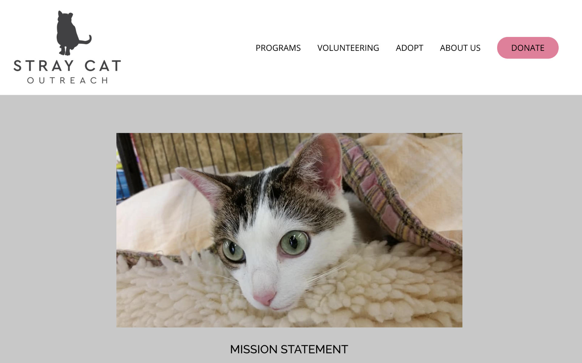 screenshot of website on iMac - Stray Cat Outreach